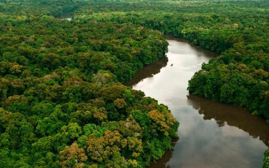 amazonia_bg_large.jpg